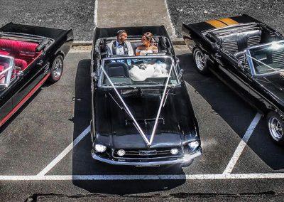 Mustangs in Black